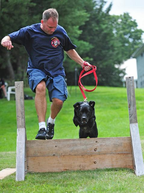 Arson Dog Daisy on the obstacle course