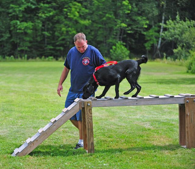 Arson Dog Daisy and Handler John jumping
